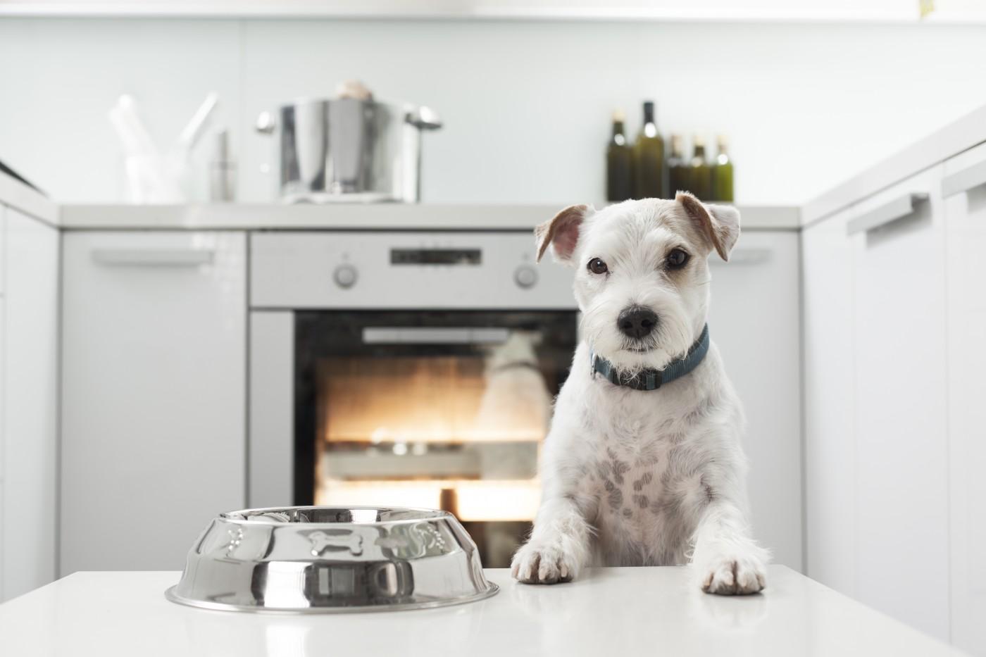 Ile wart jest rynek karm dla psów?