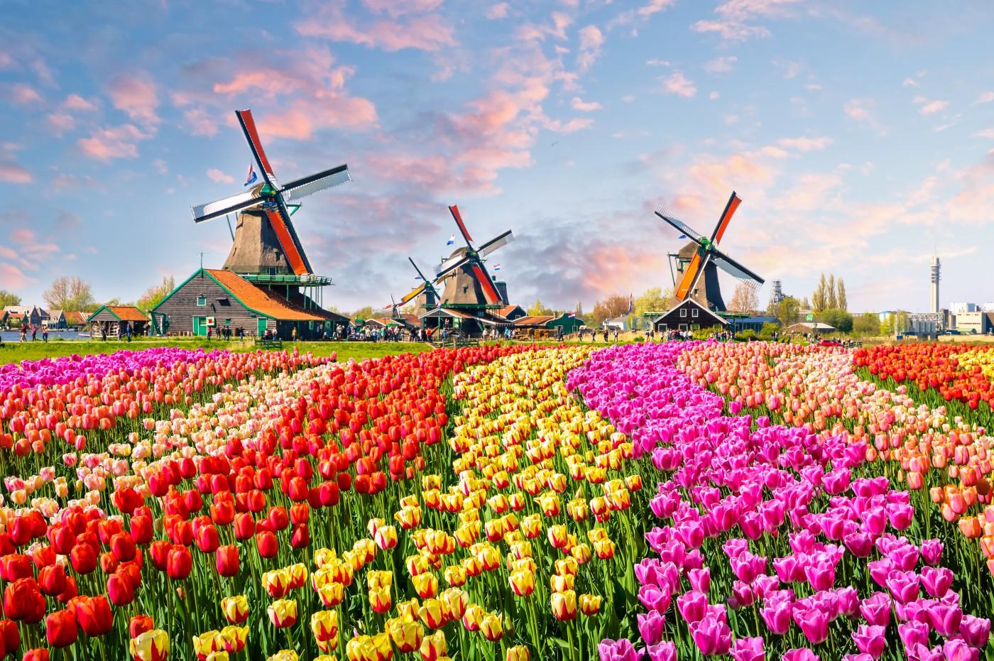 Belgia i Holandia – podobne, ale różne światy