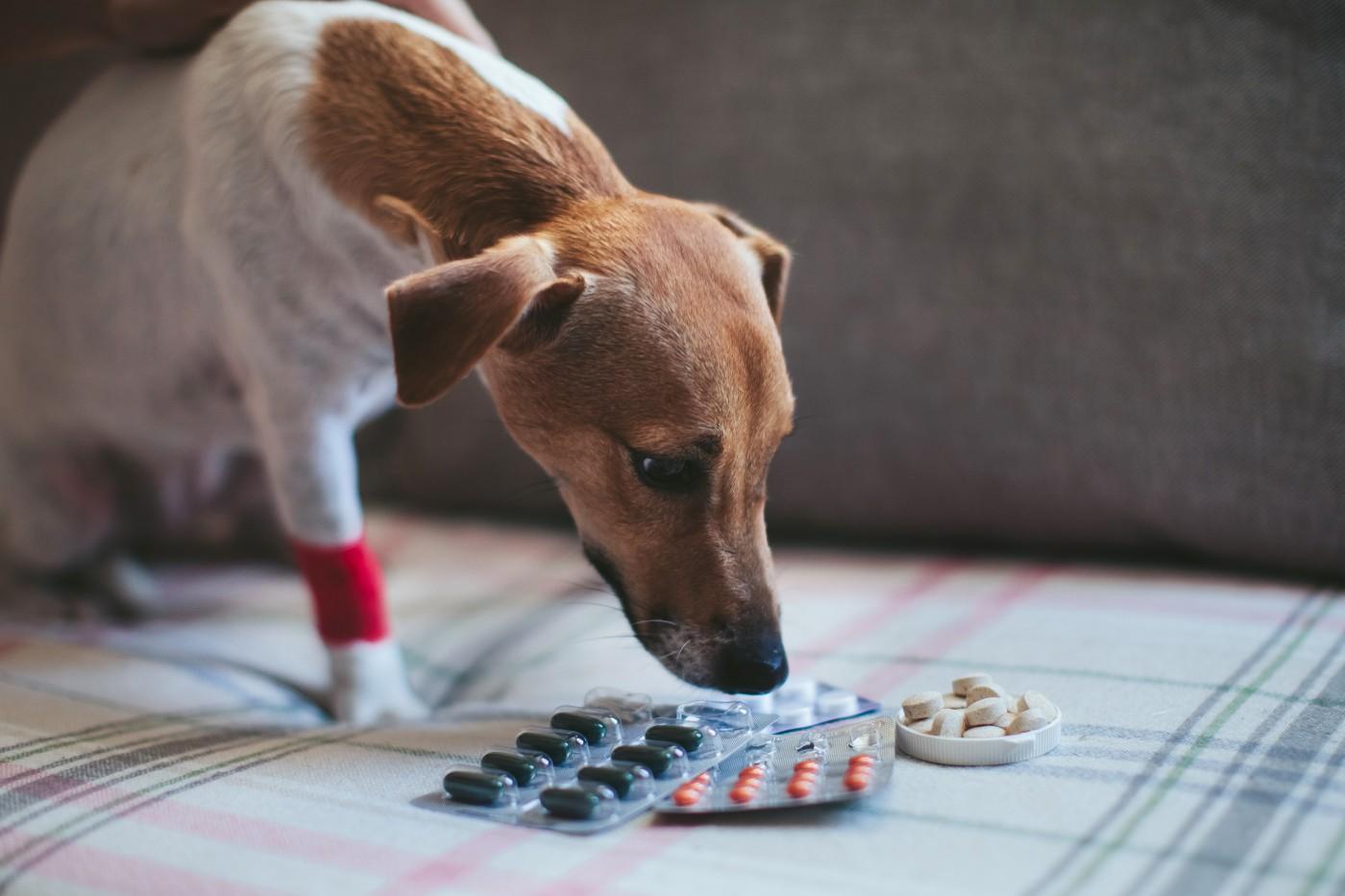 Naturalne suplementy wsparciem w psich chorobach