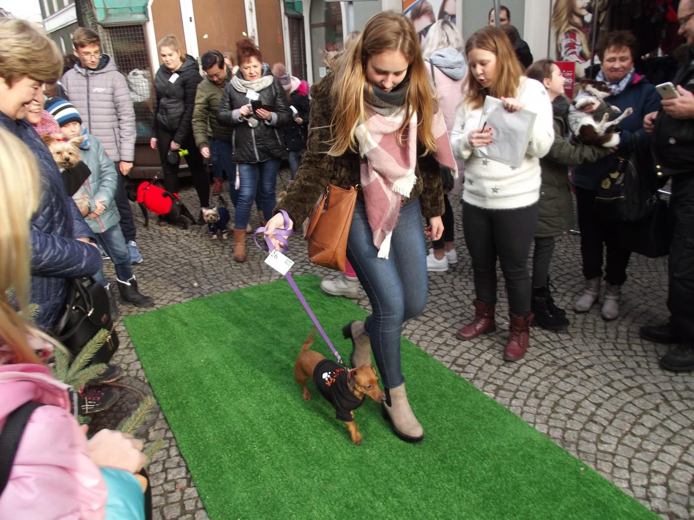 II Festiwal Ubranek – psia moda w roli głównej