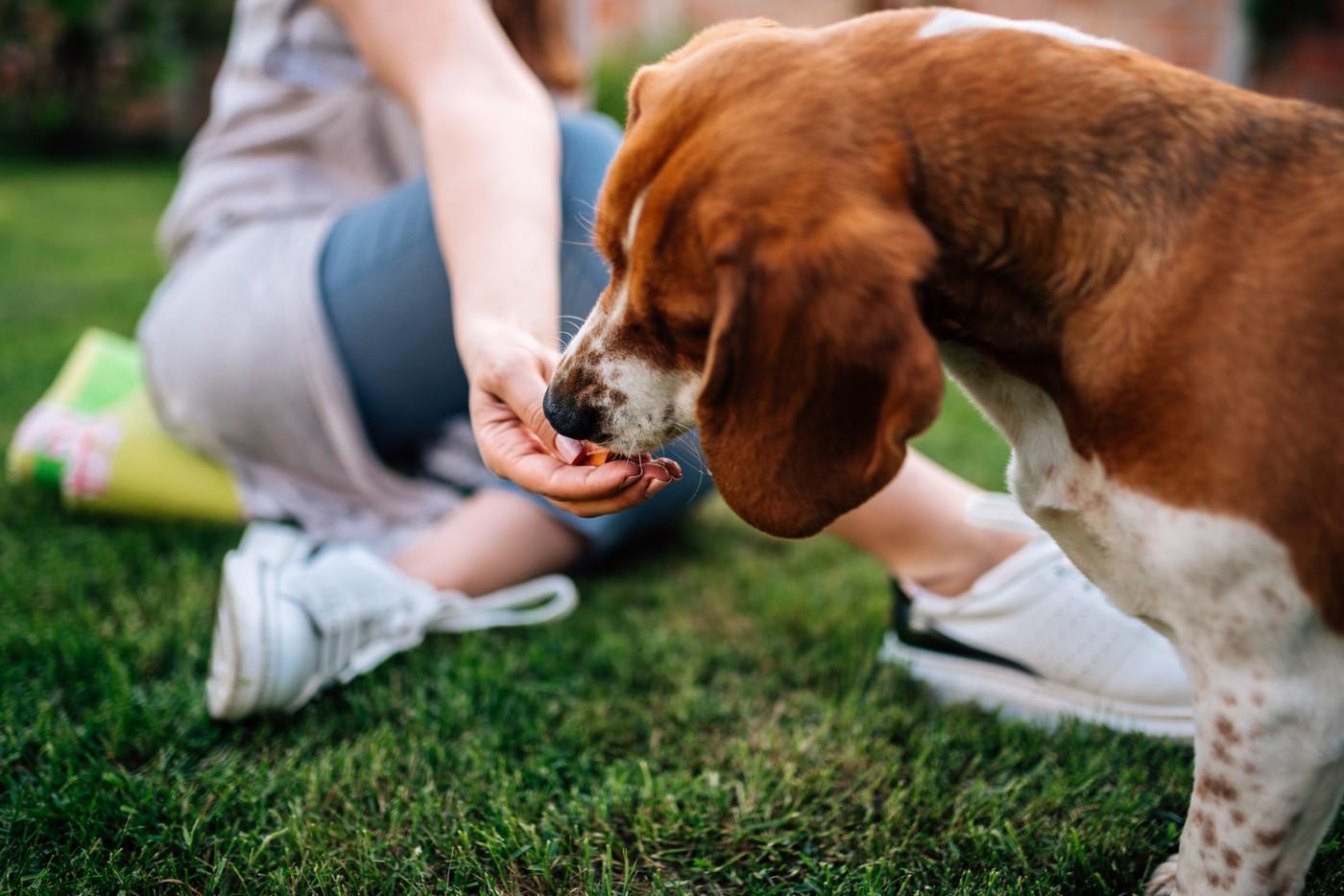 Przysmaki – uzupełnienie psiej i kociej diety