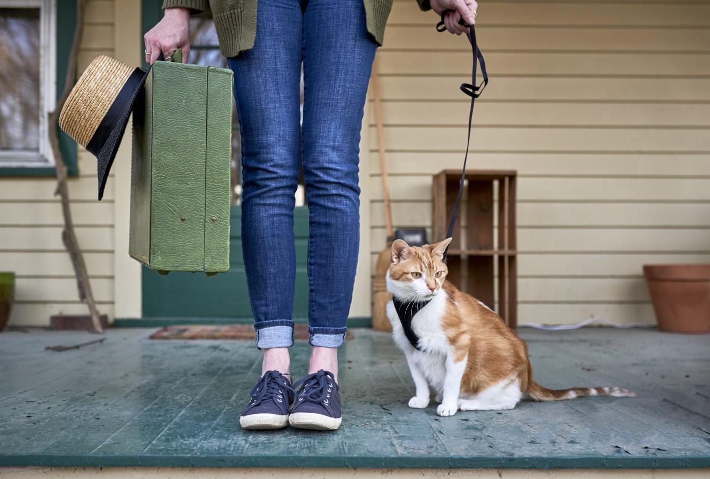 Spacery z kotem – część I