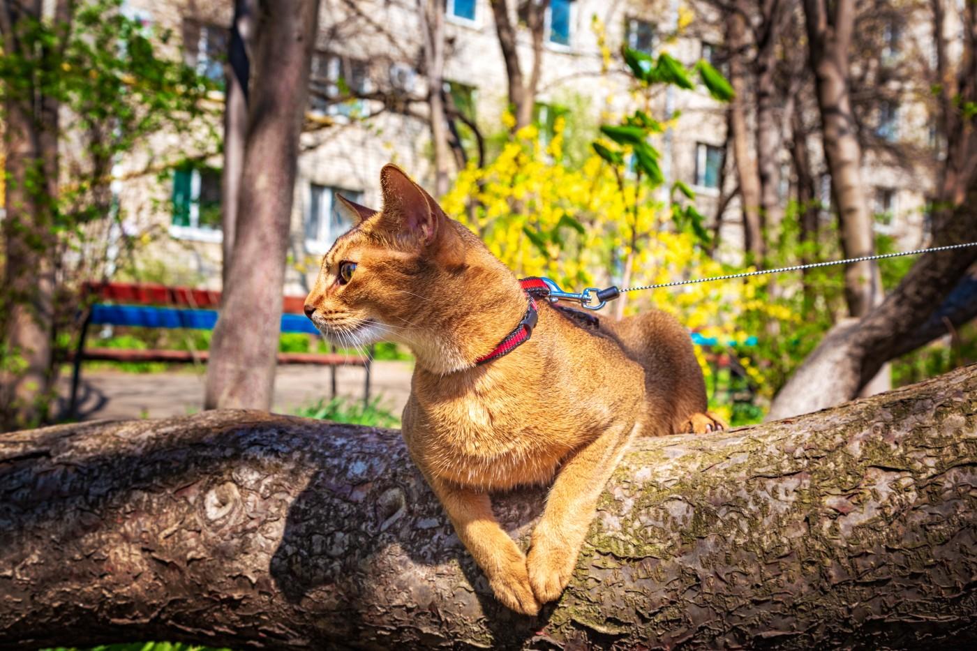 Spacery z kotem – część 2