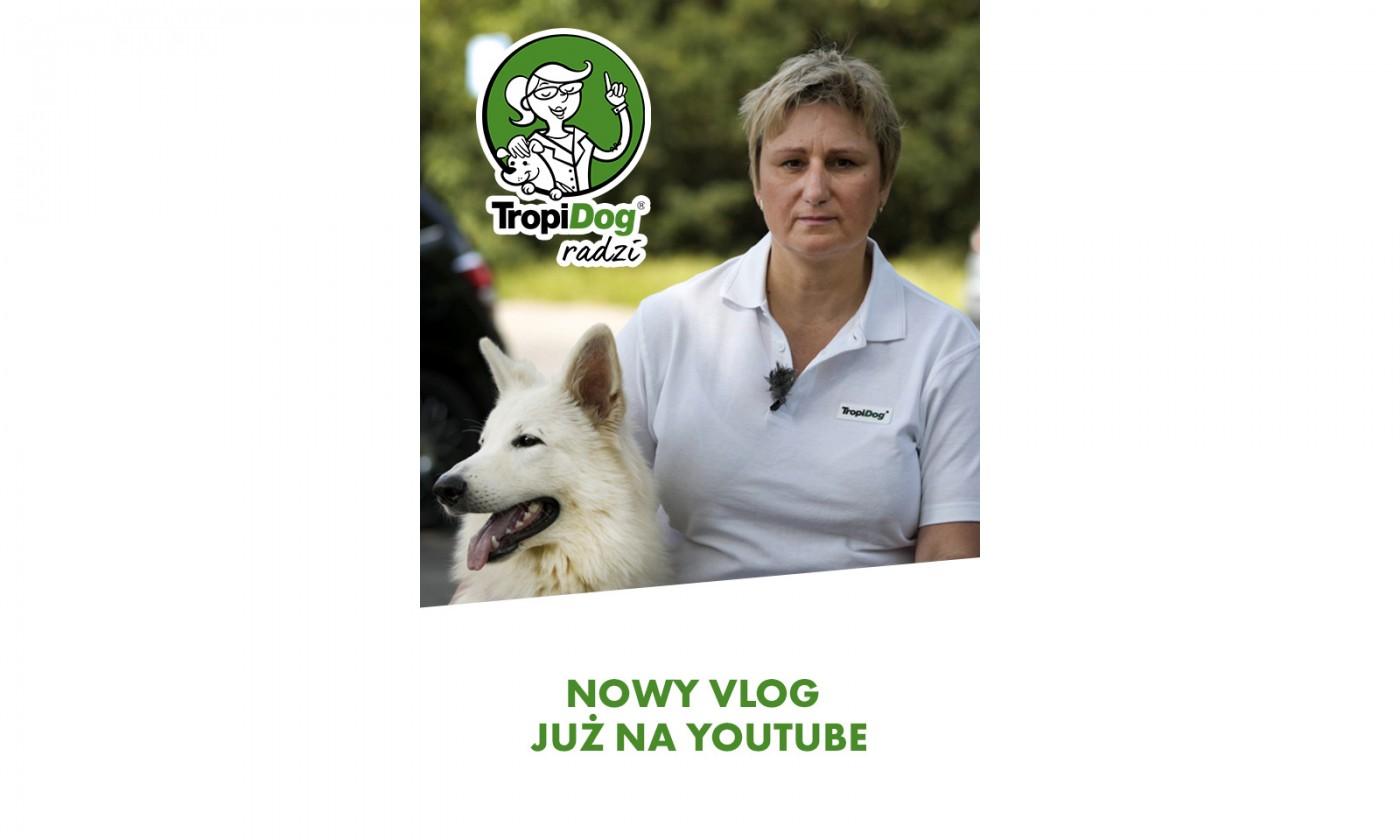 TropiDog radzi na YouTube