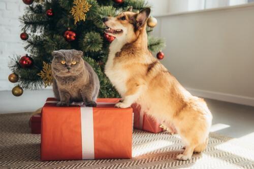 Sondaż: Czy Boże Narodzenie świętujemy razem z naszymi pupilami?