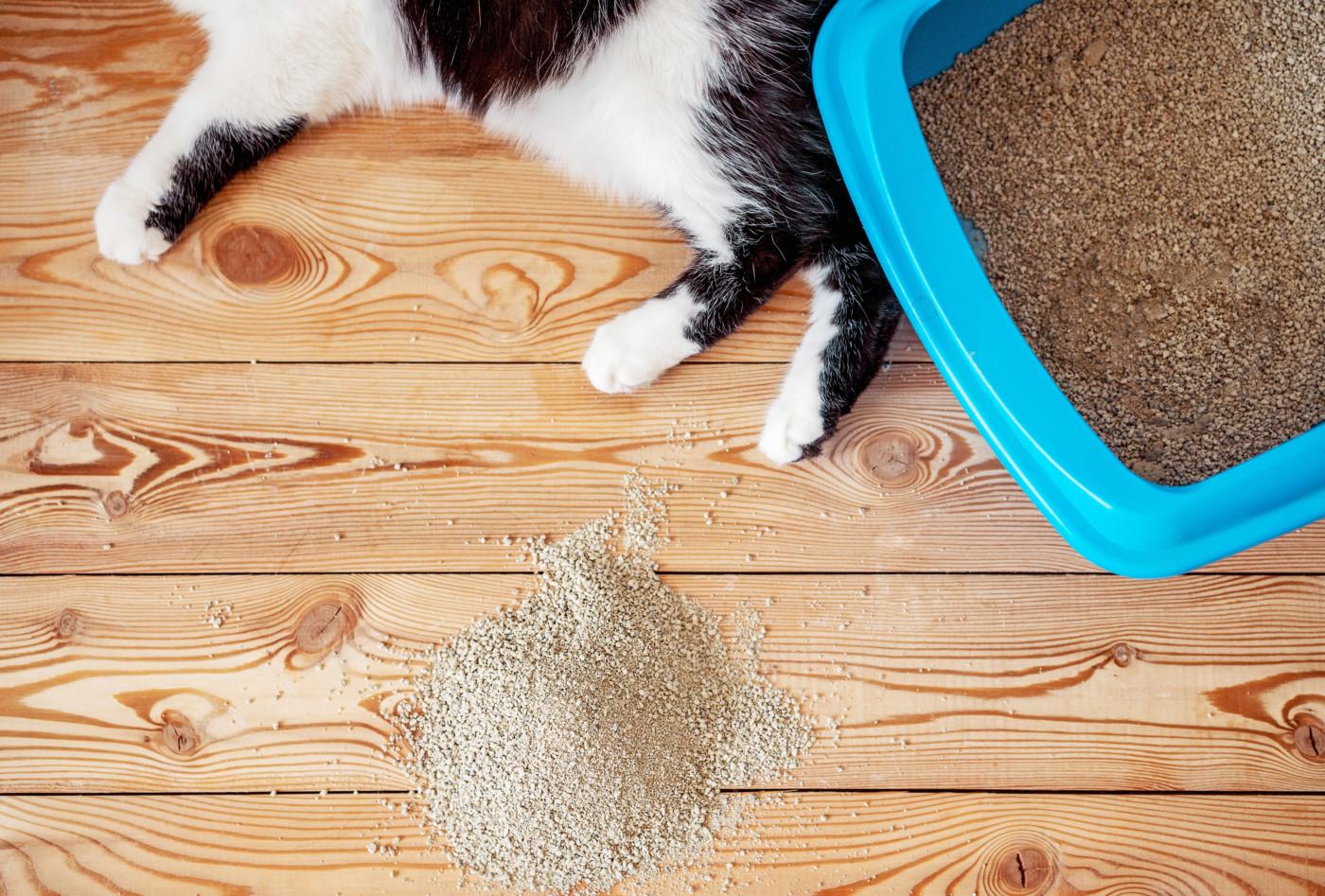 Zwierzęce zapachy w domu cz. I  – sprzedaż detergentów usuwających brzydkie zapachy