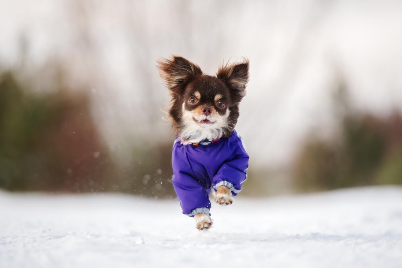 Suplementacja – wsparcie psiej odporności zimą