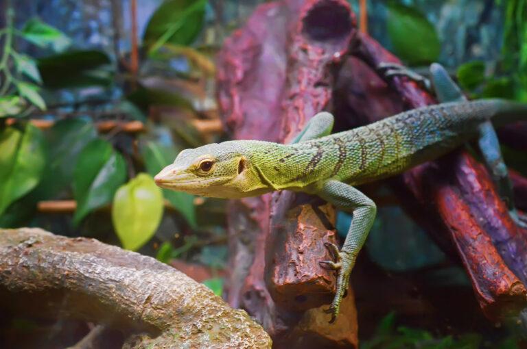 Fot Maxi Zoo8